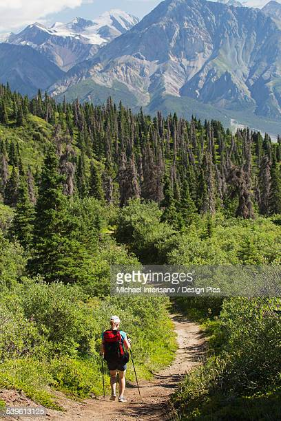 Female hiker on a trail through the forest with a view of mountains in Haines Junction