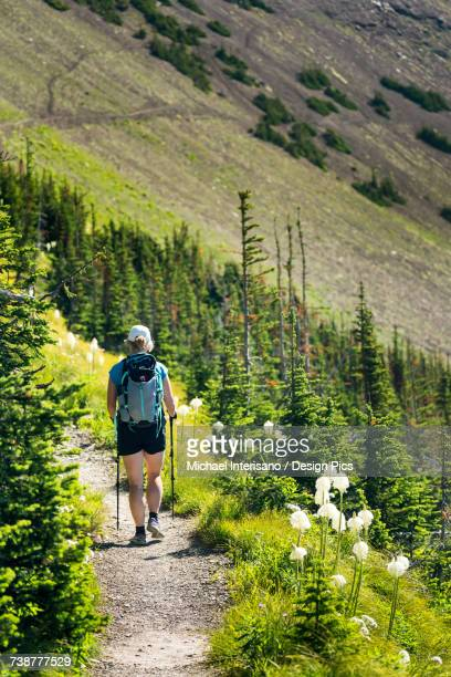 Female hiker on gravel trail along mountain side with wildflowers (beargrass) and hill side mountain trail in the background