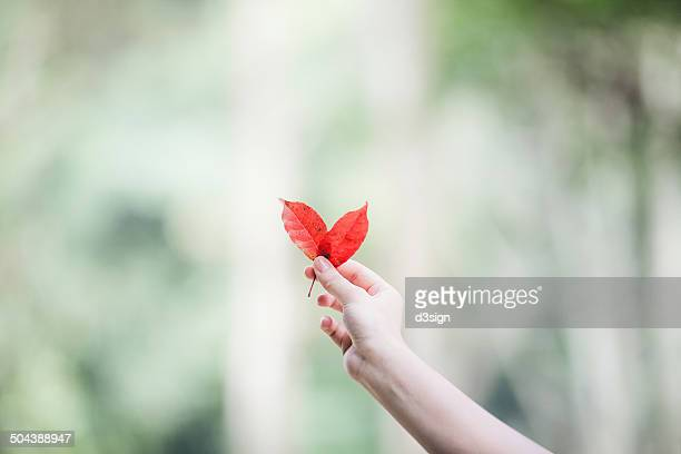 Female holding red leaves in the shape of a heart