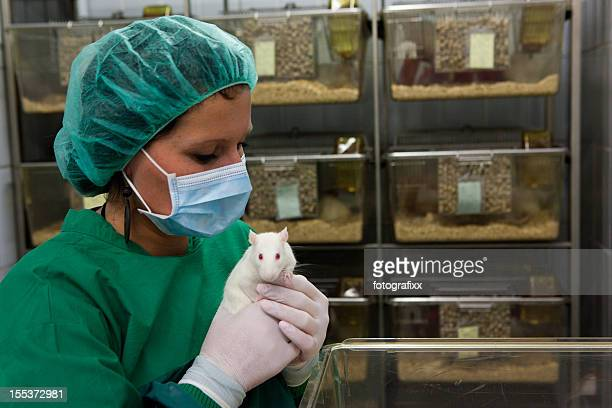Female lab assistant in scrubs holding a white lab rat