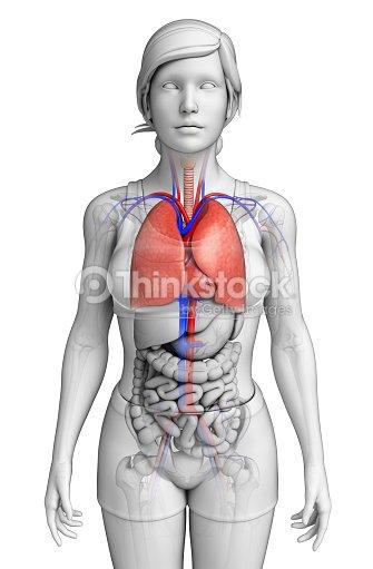Weibliche Lungen Anatomie Stock-Foto | Thinkstock