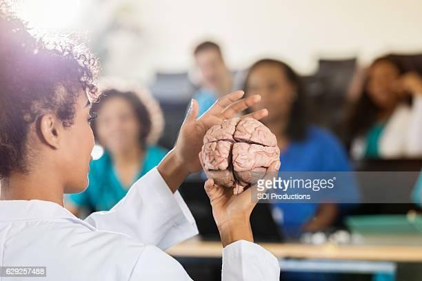 Female medical school professor shows human brain model in class