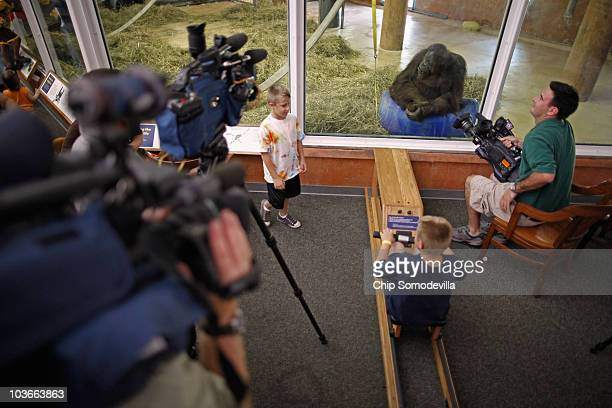 Female orangutan Bonnie 33 years old looks at visitors and television cameras at the Orangutan Pull an interactive tugowar inside the Think Tank...
