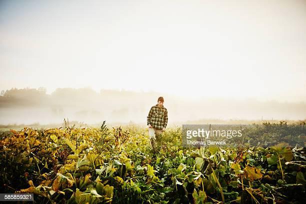 Female organic farmer walking through field