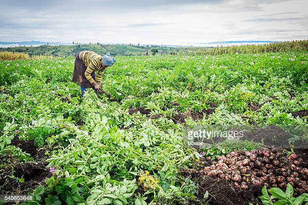 Female potato farmer