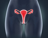 Female Reproductive System Anatomy Illustration. 3D render