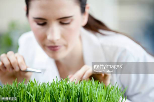Female scientist examining plants in laboratory