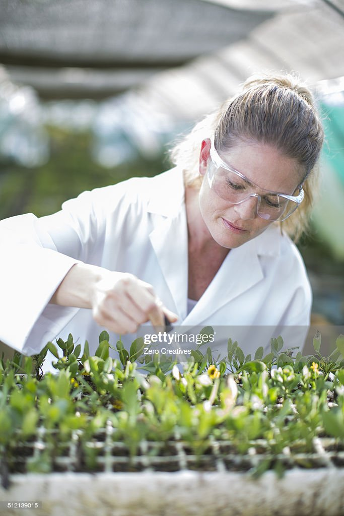 Female scientist feeding plant samples with pipetted liquid