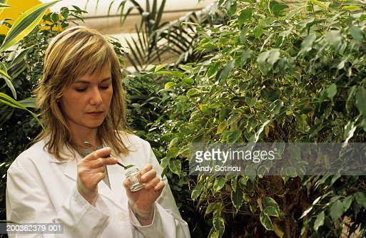 Female scientist in greenhouse, Spain : Stock Photo