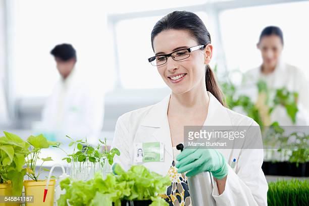 Female scientist watering plants in laboratory