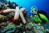 Female scuba diver beside large starfish