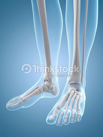 Female Skeleton Foot Stock Photo | Thinkstock