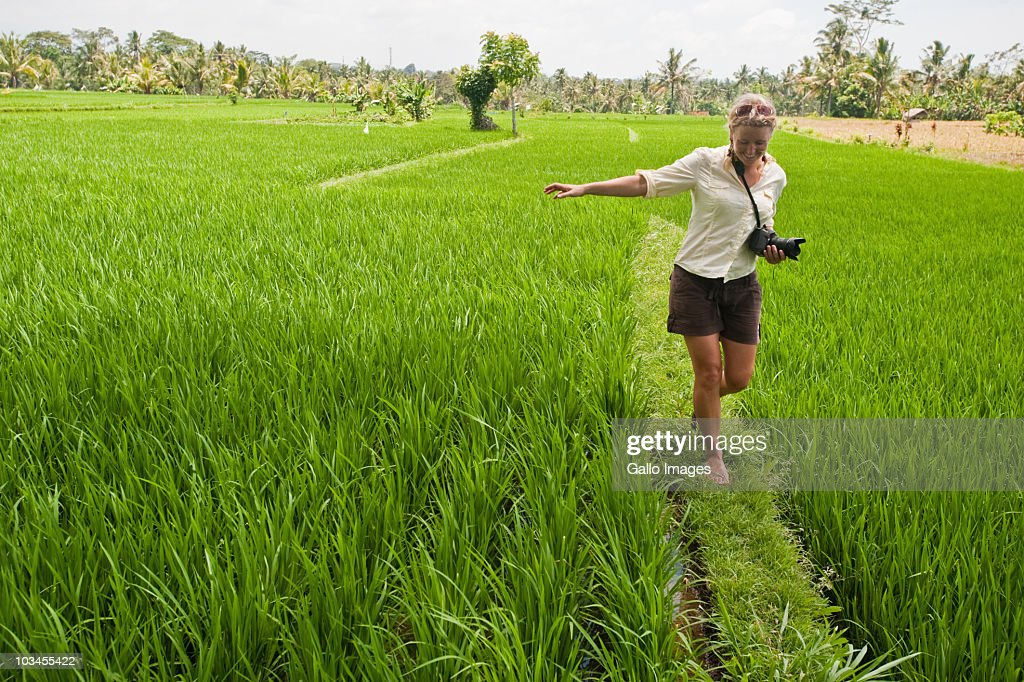 Female tourist walking along grass wall between two rice paddies near Ubud, Bali, Indonesia : Stock Photo