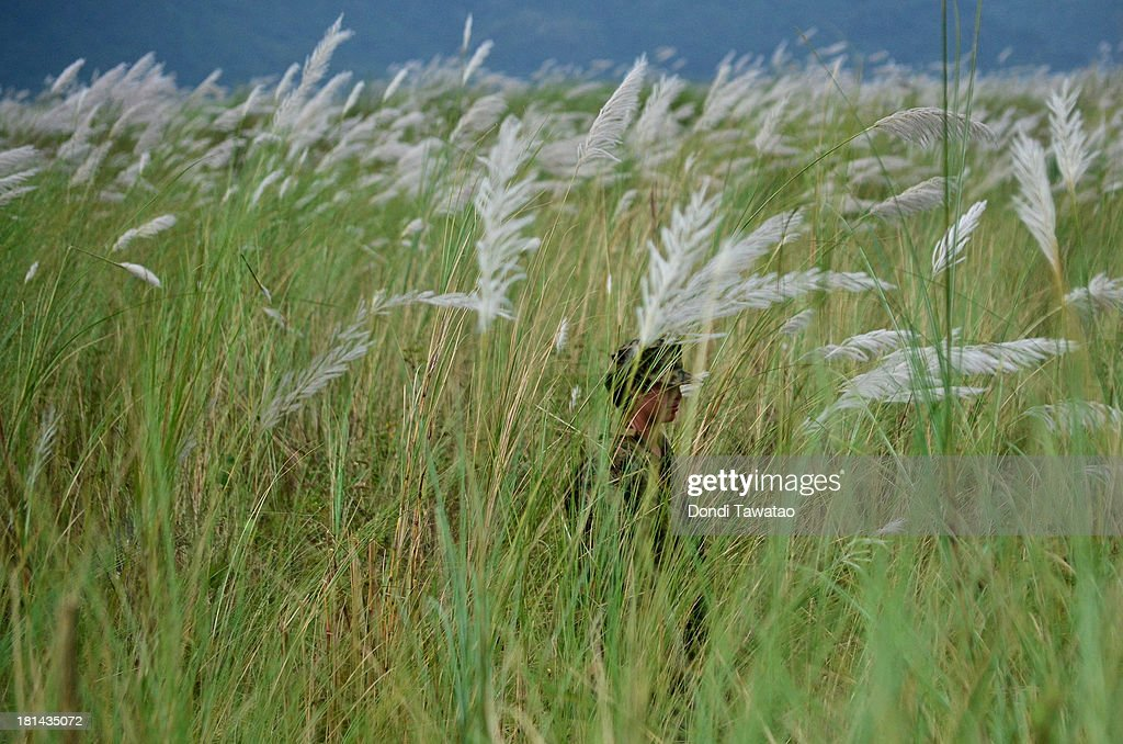 TARLAC, LUZON, PHILIPPINES - SEPTEMBER 21: A female U.S. Marine soldier walks through grass stalks during a military training exercise at Crow Valley on September 21, 2013 in Tarlac province, Philippines. Around three thousand U.S. Marines are in the country for the Phiblex amphibious marine exercise with their Philippine counterparts. The war games maneuvers run for three weeks in various locations in the Philippines.