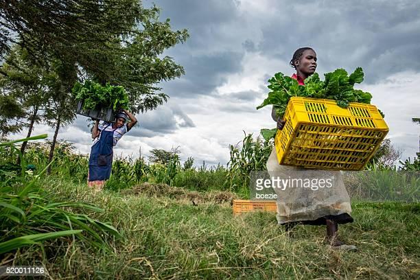 Female vegetable farmers
