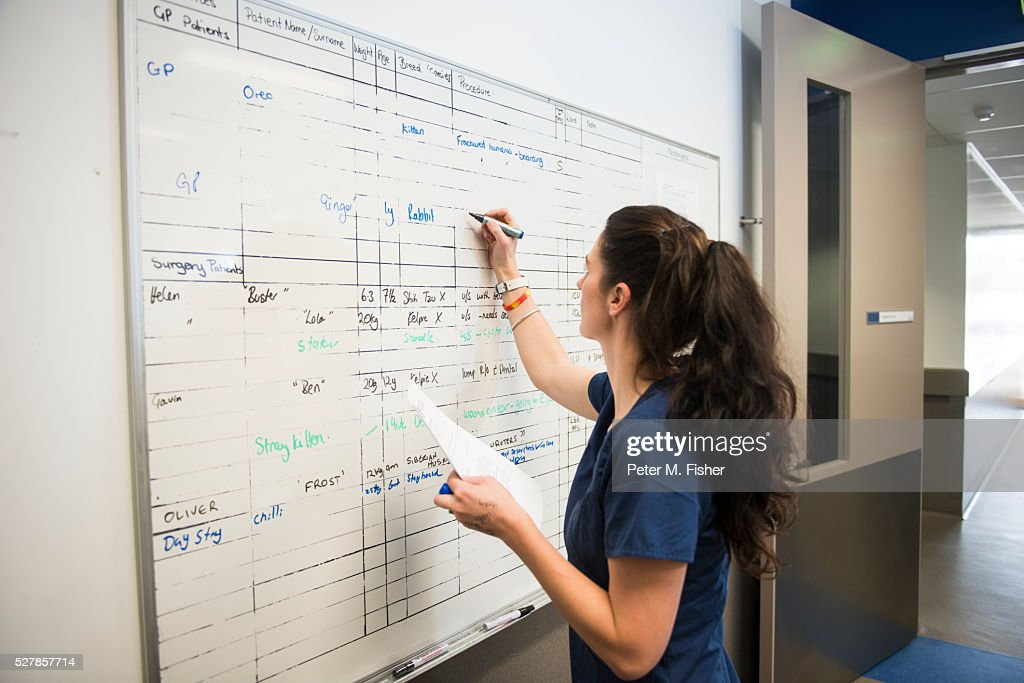 Female vet writing on whiteboard : Stock Photo
