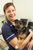 Female Veterinary Surgeon Holding Dog In Surgery