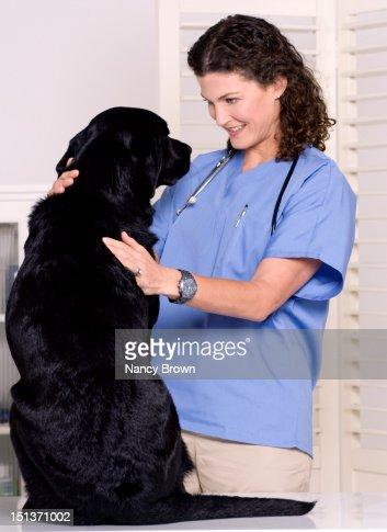 Female veterinary surgeon treating a dog : ストックフォト