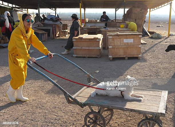 A female volunteer in yellow uniform gives a ride to a small dog sat leisurely on a push cart outside Vafa Shelter where homeless dogs are kept and...