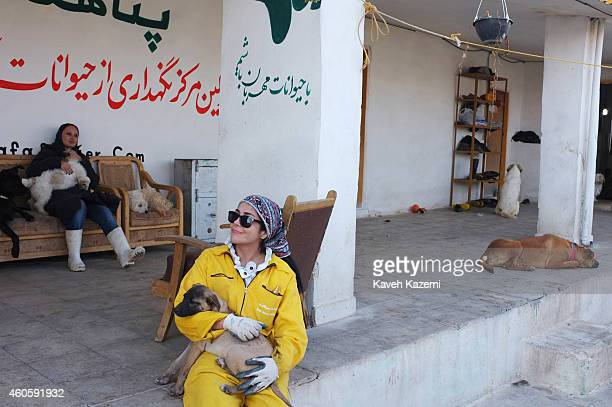 Female volunteers play and cuddle dogs inside Vafa Shelter where homeless dogs are kept and cared for on December 12 2014 in Hashtgerd Iran Founded...