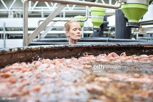Female worker examining fishes at aquaculture