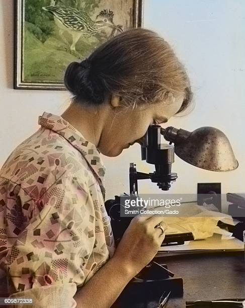 Female worker using a microscope to examine a sample at the Department of Agriculture Experimental Farm Beltsville Maryland 1935 From the New York...