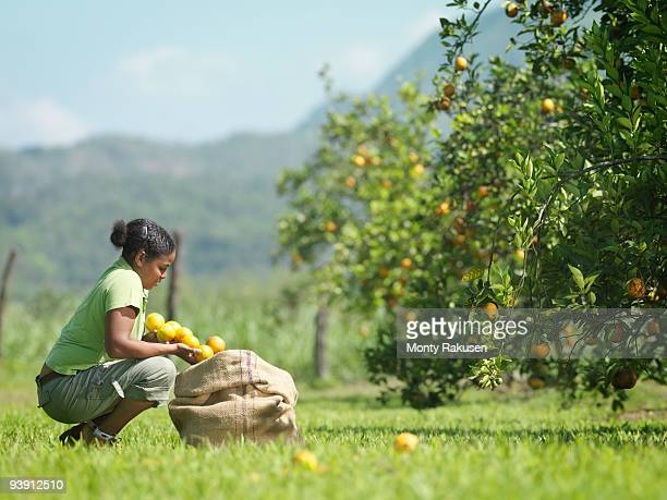 Female Worker With Oranges