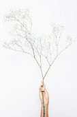 Female's hand holding branch of gypsophila on white background. Vertical image of delicate elegant flowers.