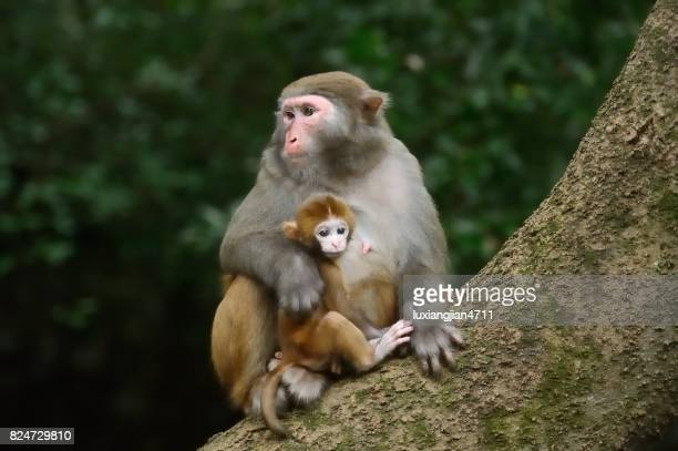 Females monkey and its baby at dusk
