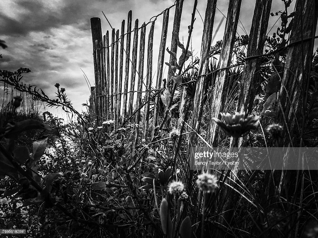 Fence Amidst Plants Against Sky