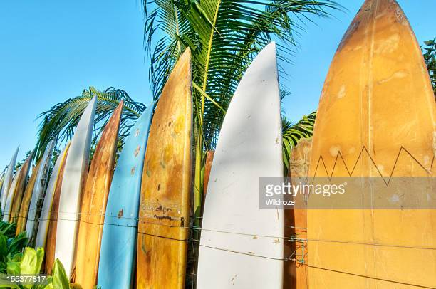 Fence made of surfboards with palm trees against blue sky