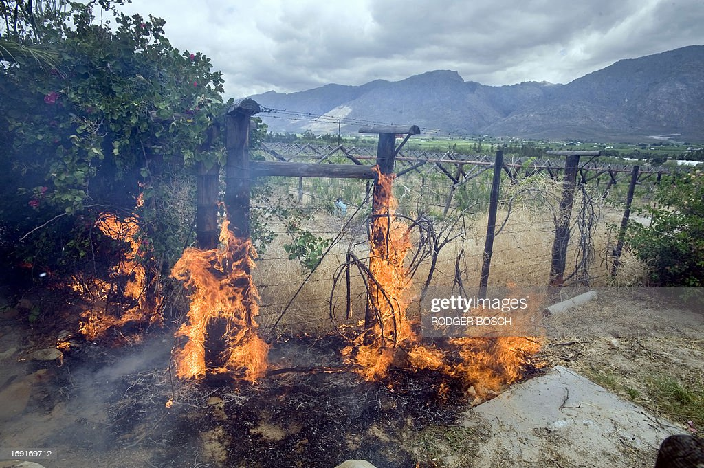 A fence on a grape farm burns during clashes between striking farm workers and anti-riot police forces on January 9, 2013 in de Doorns, a small farming town about 140km north of Cape Town, South Africa. Workers on fruit farms have downed tools, demanding a wage hike from 69 rand ($8) to 150 rand ($17.50) a day. The protesters also occupied part of the country's major N1 highway, forcing dozens of police officers and two armoured vehicles to move down the road, pushing the protesters back from the town entrance.