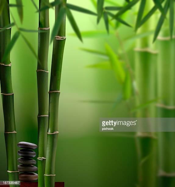 Feng-Shui-Dschungel