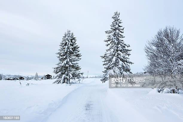 Fer trees with track in snow landscape.