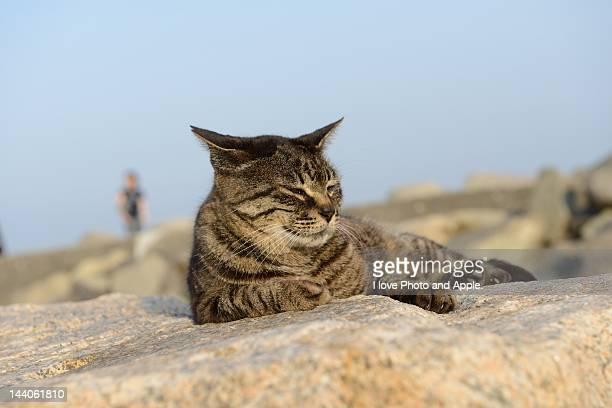 Feral cat seaside