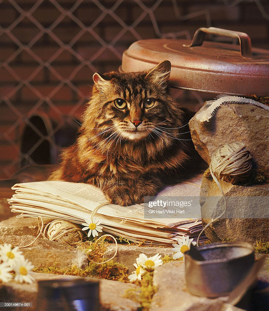 Feral cat sitting on newspaper : Stock Photo