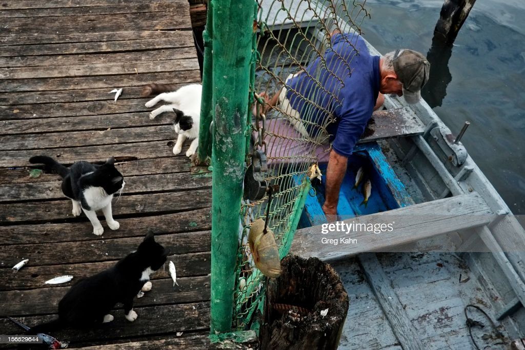 Feral cats crowd a boat in the hopes of receiving scraps from fishermen at a local dock November 16, 2012 in Havana, Cuba. Despite Cuba's fisheries being at critically low levels according to the United Nations, fishermen are still catching enough to make a living.