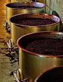After the crush, winemakers add yeast to wine must (or juice). Fermentation takes from ten days to more than a month. Sugars in the grapes convert to alcohol during fermentation. Red wine juice underg