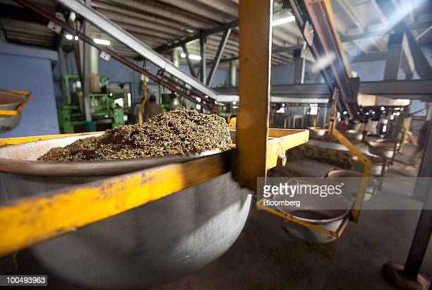 Fermented tea leaves are transported along a conveyor belt at a tea factory in Coonoor India on Friday May 21 2010 India is the world's largest...