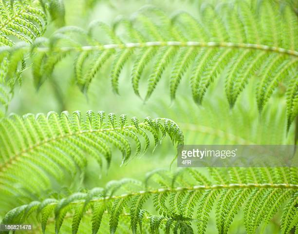 Fern Background (XXXL)