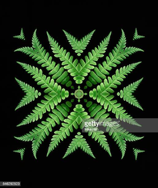Fern leaf mandala pattern