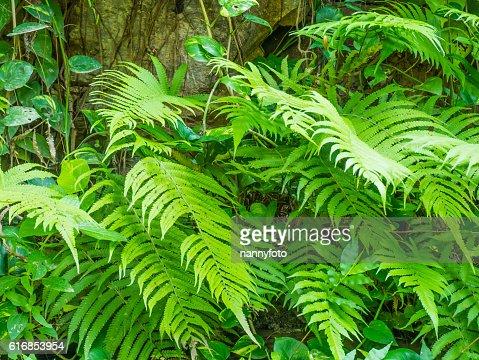 Fern leaf : Stock Photo