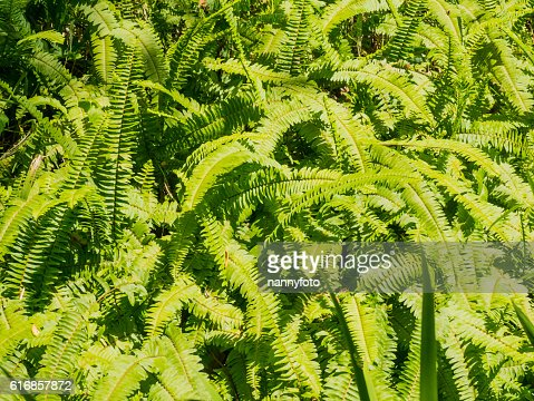 Fern leaf : Stock Photo