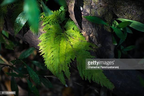 Fern leaf shined by sunlight in jungle