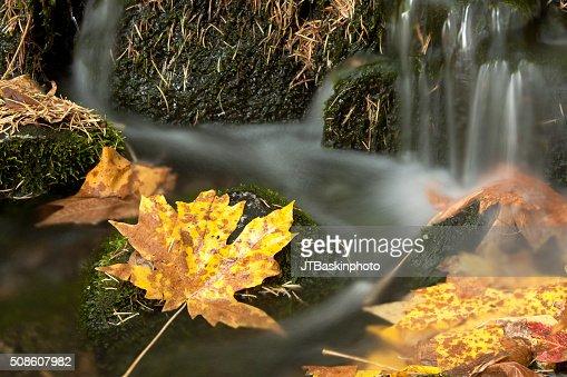 Fern Spring in Autmun : Stock Photo