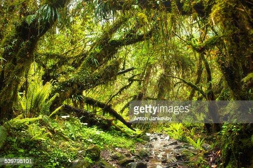 Ferngully: the rainforest