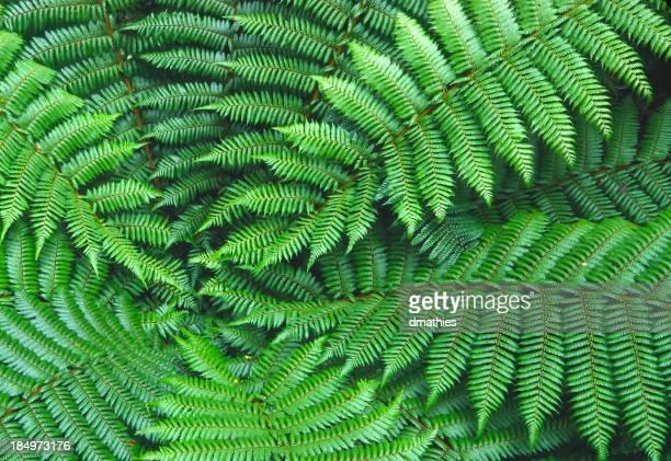 Ferns em de Fiordland