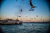 Ferry Boat Sailing On Sea By Seagulls Flying Against Clear Sky At Sunset