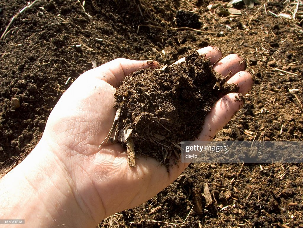 Fertile Garden Compost Sample Stock Photo Getty Images