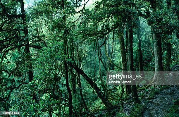 Fertile green forest above the village of Baktim in Sikkim.